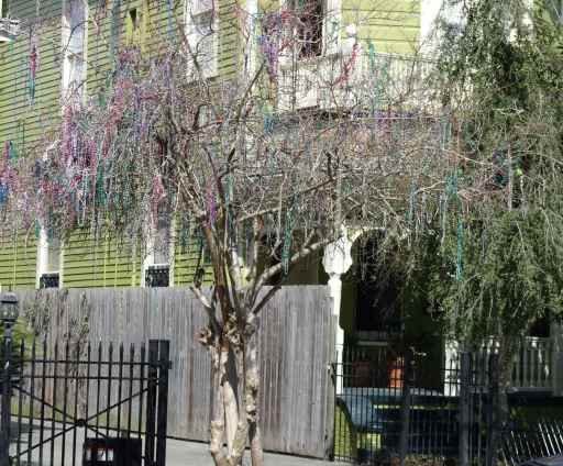 Mardi Gras beads add a splash of color to the trees