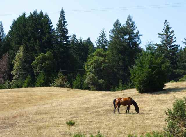 A handsome horse grazed on the hillside oblivious to three walkers.  Bob called to him and finally coaxed him to the fence with the offer of some tall grasses.   It must have been delicious because the horse followed Bob, hoping for more.  (Bob sees him most days on his walk.)
