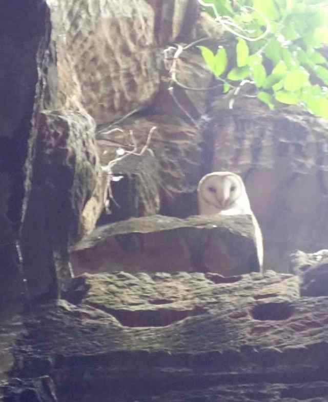 Inside Ta Prohm we looked up and spotted 2 eyes looking down at us – a XXXX owl.
