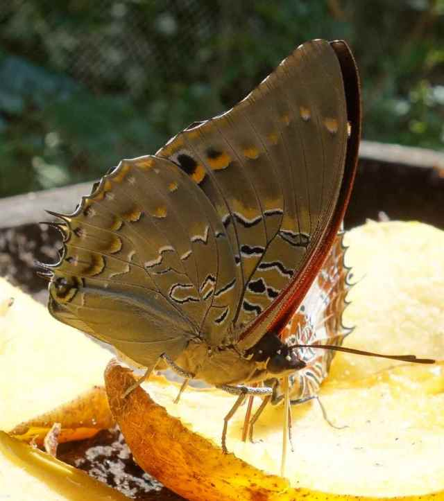 Butterfly Center Tour of Jozani Chwaka Bay NP and Butterfly Garden