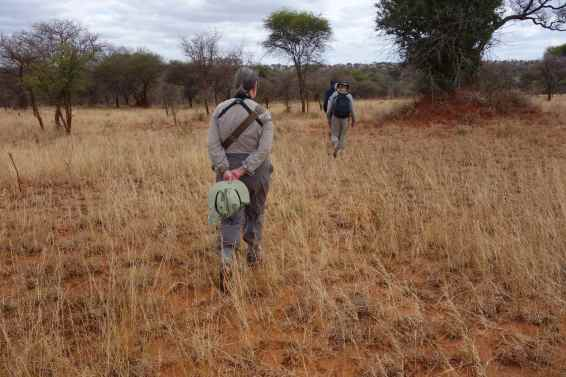 Ellen walking in the Maasai Steppe Wilderness.