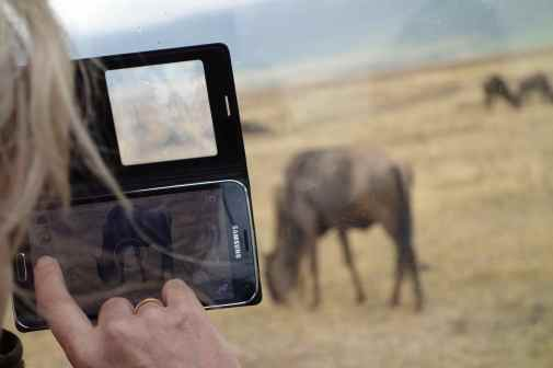 Capturing a wildebeest in Ngorongoro Crater