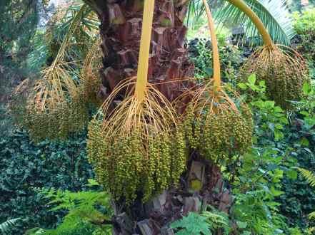 Quinta Palmeira