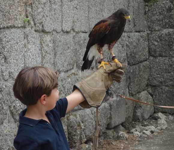 A falconer was inside the castle and allowed visitors to hold his bird of prey.