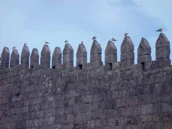 The old city wall as a seagull perch.