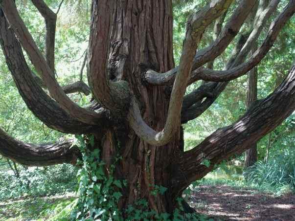 Photo taken at the Serralves Park