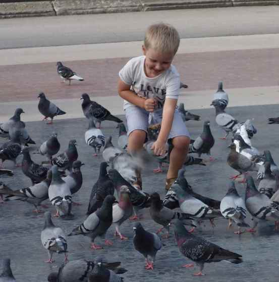 Pigeons are everywhere in cities but this little boy took delight in cautiously feeding them.
