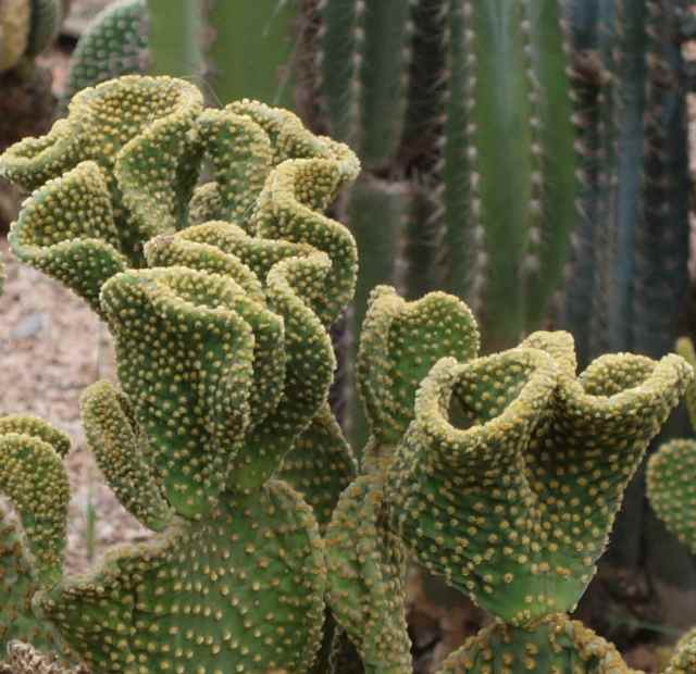 Some cactus were familiar from our trips in the southwest US desert.