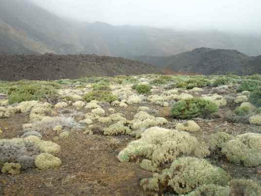 The dried white-green plants contrasted nicely with the black volcanic hills.