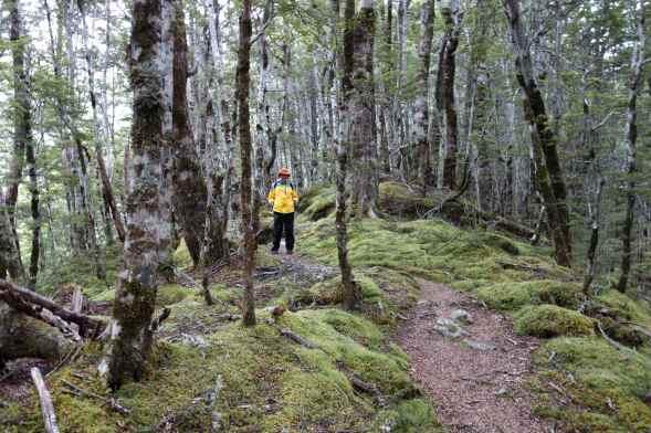 Joe hiking in Manapouri, South Island, New Zealand