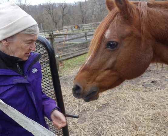 nn brought carrots for Libby, her Arabian horse, who is boarded in a park stable.