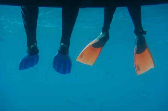 Snorkeling at the Great Barrier Reef off Port Douglas, Australia