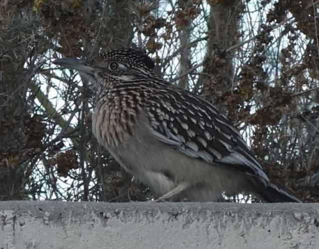 Unusual sighting…of a roadrunner perched on a wall down the street from our AirBnB. We were only a few feet away. Not something we see every day!