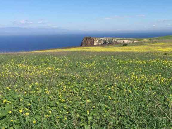 We hiked up a trail overlooking Cavern Point and fields of blooming January flowers.