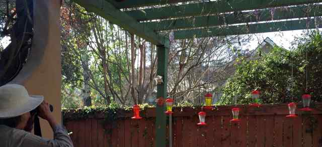 We loved observing the little hummingbirds from the best seats at the house.