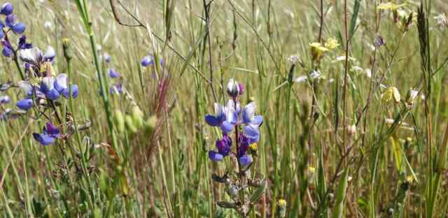 Even lovely birds compete with sumptuously colored wildflowers.