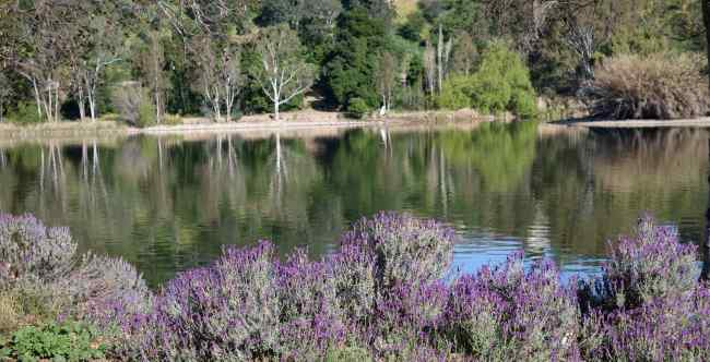 Birds flew through Vasona Park, but, instead of birds, we photographed this view of the pond in the early morning.
