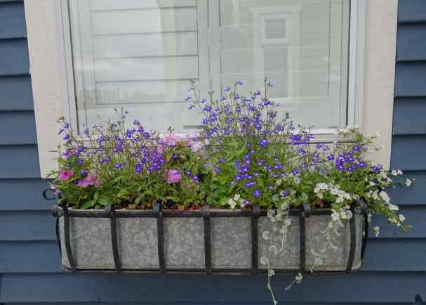 Gardening skills are mostly confined to lush window boxes, and these provided a way to add more eye-catching colors on a small SCALE.
