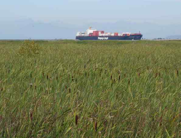 We loved the illusion that the distant container ship was sailing on a sea of grass.