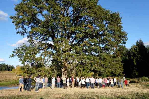 We gathered under the Oregon white oak (Quercus garryana) while Narendra told us that a source of food the native people planted near water were the oak trees and camas lilies. The lilies and the trees' acorns provided food for them.