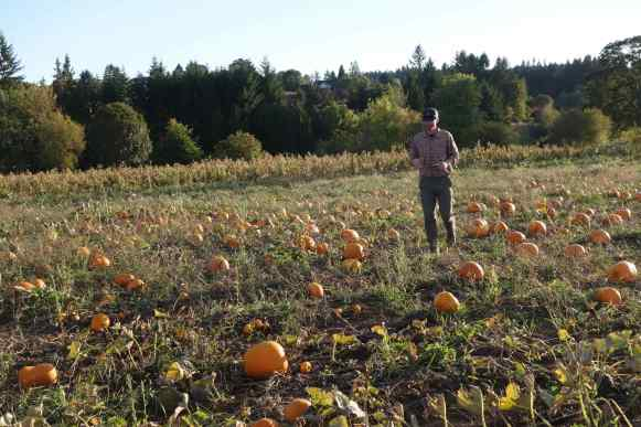 Our son, Josh, in a field of pumpkins.