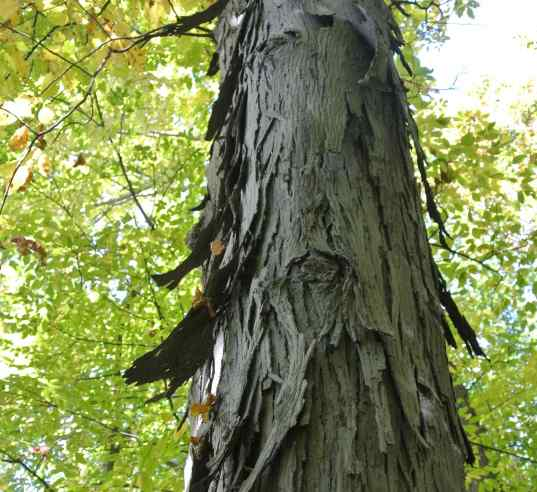 Imagine the tree turning, and its bark flaring out like a skirt. Photo taken by Nancy.