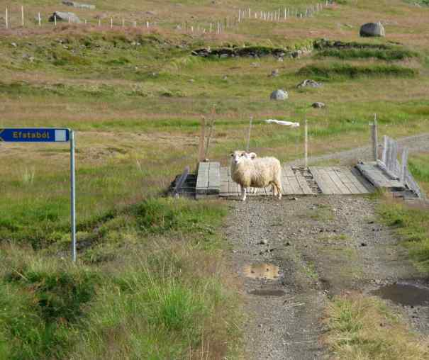 Sheep roamed freely and were willing to pose for anyone with a camera.