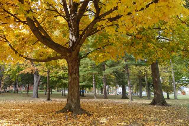 OHIO – Wilmington College. Autumn was the right time to see the magnificent trees on the campus.