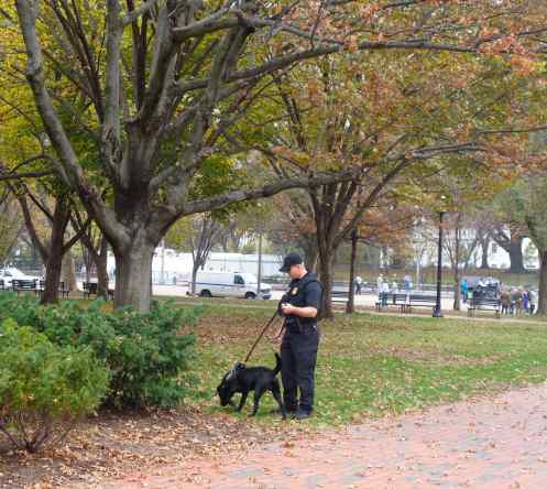 …and proximity to the White House. This dog was working and not just taking a stroll through the park.