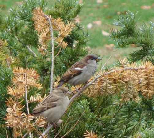 he crowd gathered on Pennsylvania Avenue was very close by but only a few people had entered the park. Were we the only ones enjoying the birds, the trees, and…