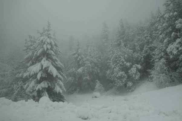 …or this. The snowy scenery turned the slow drive into a wonderland perfect for photography.