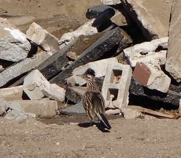 The bird seemed confused by it all. After all, this once empty lot had been its grounds long before the construction workers had shown up.