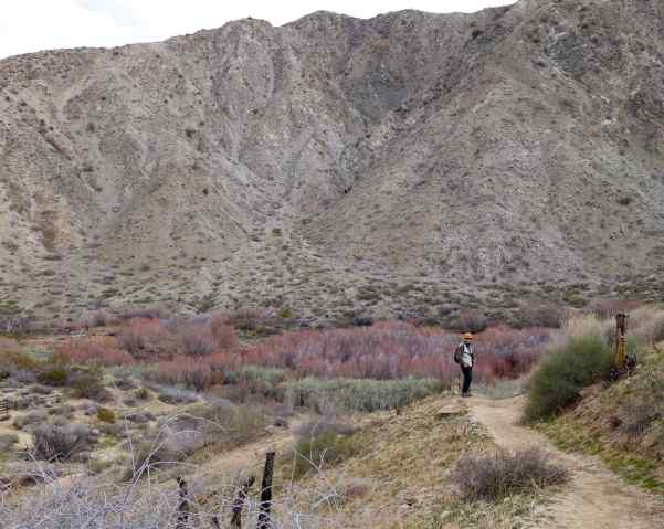 We sometimes headed back to the Preserve after lunch to hike the Mesquite and the West Canyon Trails.