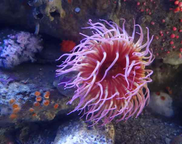 "Sea anemones are known as the ""flowers of the seas"" and named after anemone flowers.   The sea version was actually thought to be carnivorous animals, but, recently, the sea anemone's genetic makeup indicates a half-animal, half-plant."