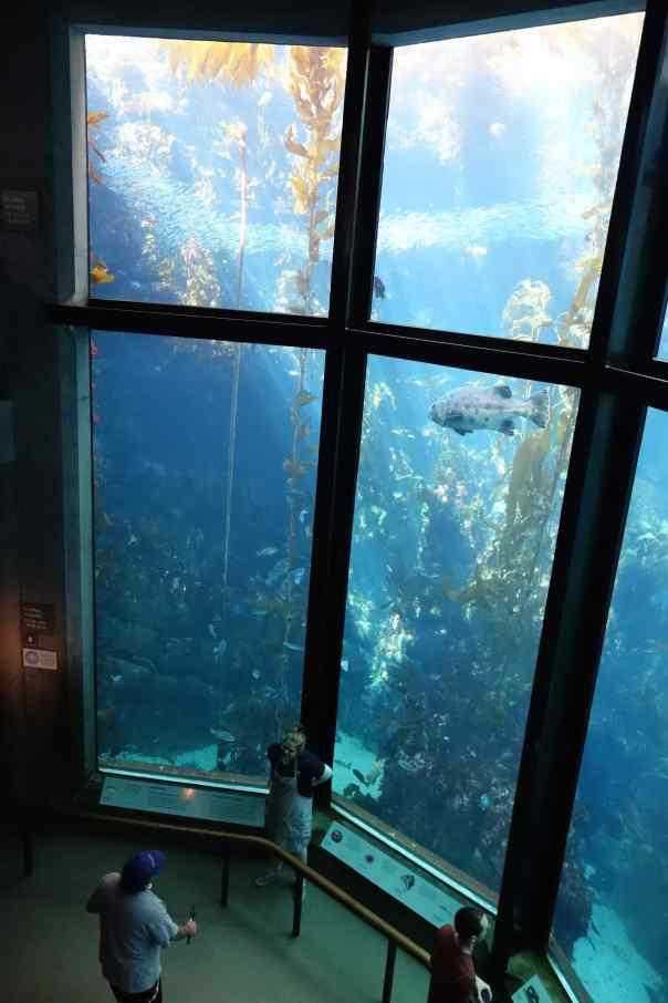 """Our first view of """"The """"Kelp Forest"""" took our breath away. The exhibit is 3-stories tall and holds 333,000 gallons of water with so much marine life we couldn't possibly take it all in."""