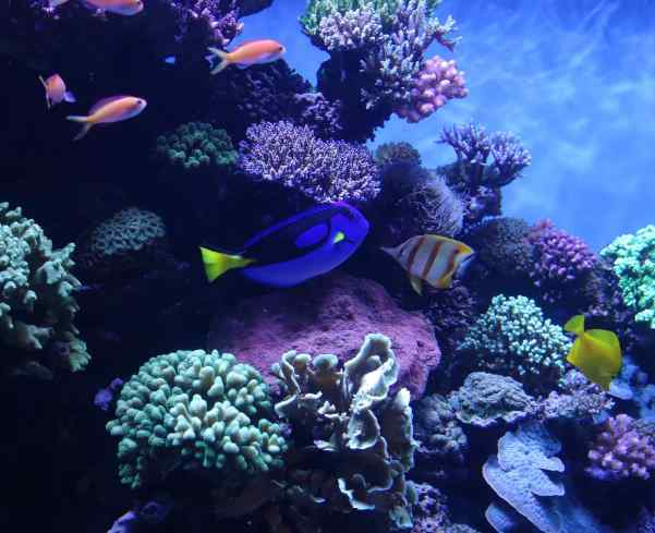 Is the marine life in these large aquarium tanks chosen based on a color scheme? All the colors work so well together…