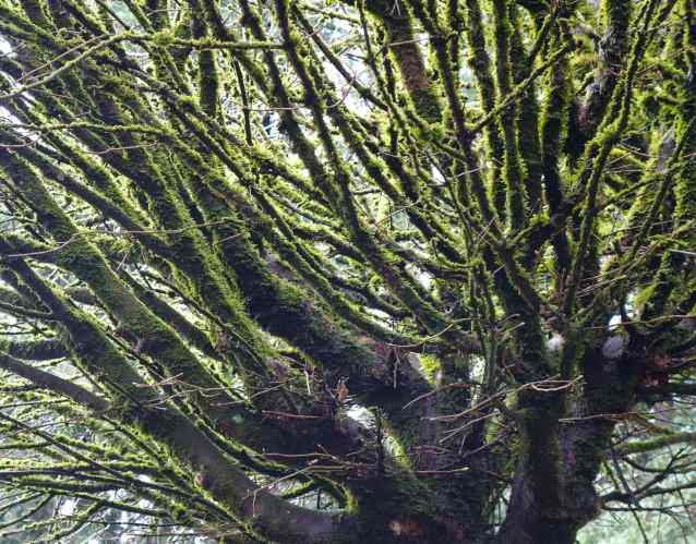Even the tree branches are lined with shiny emerald moss.