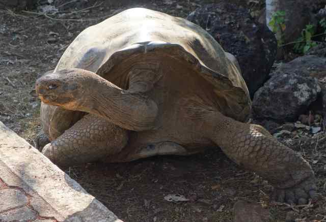 And, yes, we did see the Galapagos tortoises.