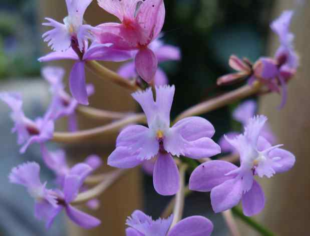 We thought of orchids as a single flower on a long stem. It was a surprise for us to see clusters like these.