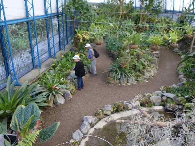 Our friend, Louise, helped us explore the greenhouses. The plants were nicely displayed, and none were the old, familiar species.