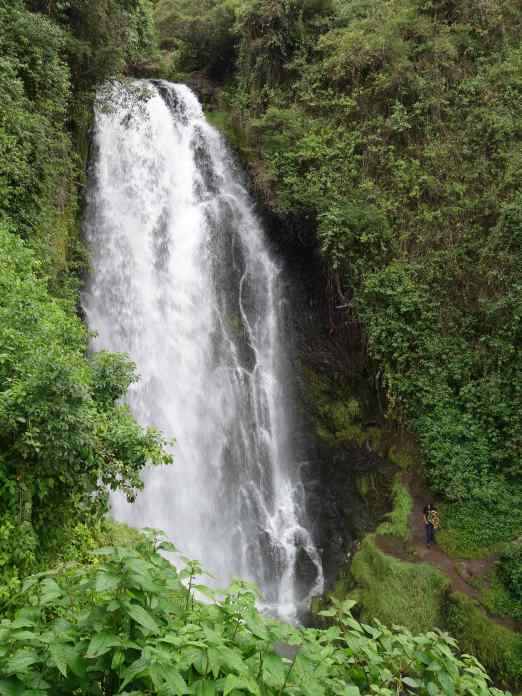 It wasn't until we had descended the hill, far below the falls, that we discovered the path back up to a good look-out spot. The Peguche Falls are 18 meters (50'). The drop is more impressive in person since it's much higher than it appears, and the water was coming down with a lot of force. If you spot the person on the dirt path at the lower right, it will put the height in perspective.