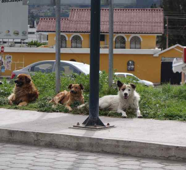 Further down the road, local dogs barely acknowledged us as we passed by.