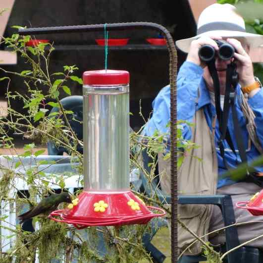 The hummingbird feeders at Las Gralarias provided relaxation and great bird viewing. We perched on chairs with cameras and binoculars in hand and watched a dazzling array of hummingbirds fly to the feeders.