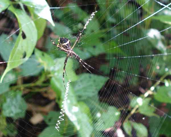 Remarkable spiders were the norm, and this one might have been the biggest and easiest to photograph.