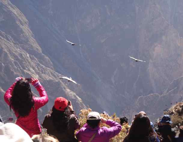 In mid-morning, we joined the crowds at the lookout for the Andean condors in Colca Canyon - cameras at the ready. Quick! There they are! Snap, snap, snap.