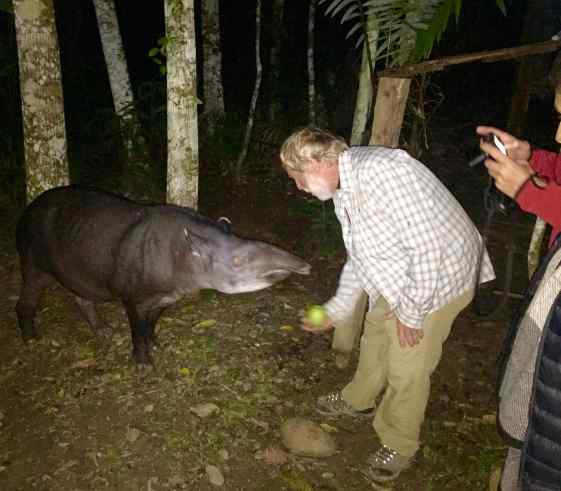 """After dinner one night, a tapir appeared outside the kitchen door. The tapir, named """"Vanessa"""" by the staff, is about 17 years old. She can be gone for months at a time but then appears at the kitchen door for a """"hand-out"""" of vegetables."""