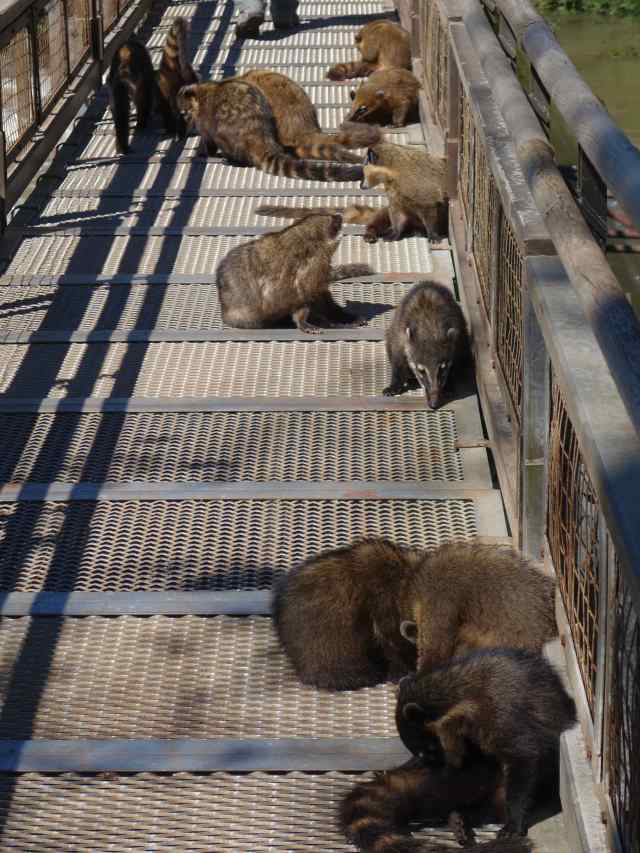We assumed, as in most national parks, that we might catch a glimpse or two of a wild animal. We were taken aback to see at least a dozen of them sunning on the narrow bridge we needed to cross!
