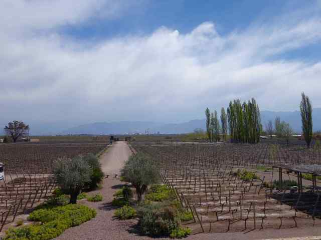 We visited wineries in Lujan de Cuyo, famous for its Malbec wines. The region is dry and hot in the summer with water channels flowing down from the Andes Mountains, an essential source for irrigation.