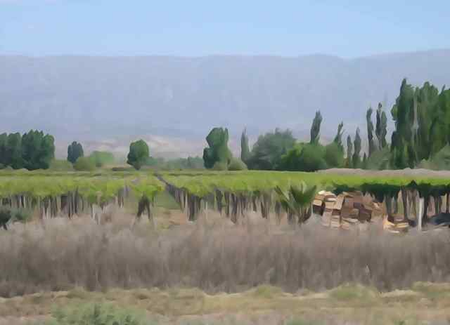 To capture a vineyard outside Mendoza, we used the watercolor setting on the camera.