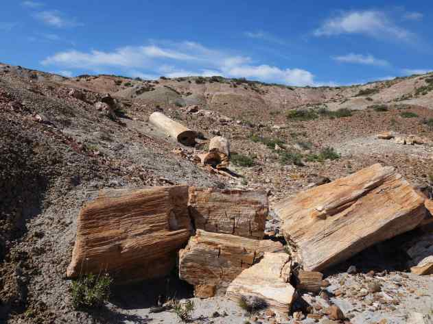 You might be wondering – just what is petrified wood? It's wood that has gone through the process of turning into stone. Long ago, there were volcanoes here in Patagonia, and the ash from an eruption buried the wood cutting off all oxygen so the wood did not decay in the usual way, but turned into mineral rock.